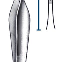 Feilchenfeld Iris forc 11.5cm