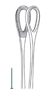 Foerster forceps 25cm